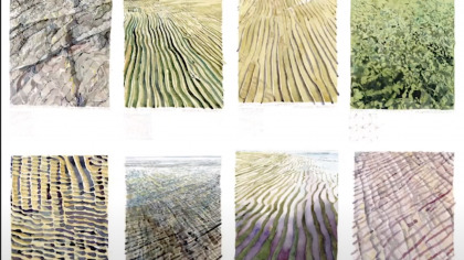Grid of 8 images showing patterns and textures in nature
